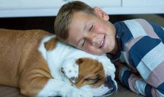 Best Anti-Flea & Tick Products for Bulldog