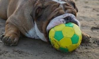 Best Balls Toys for Bulldog