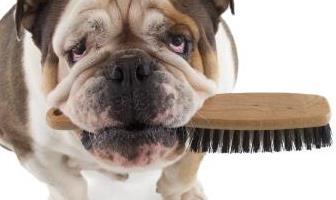 Best Deshedding Tools for Bulldog