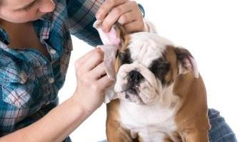 Best Ear Wipes for Bulldog