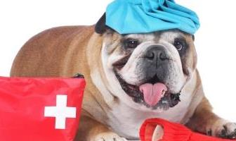 Best First Aid Kits for Bulldog