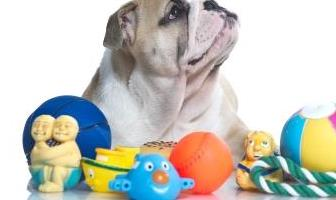 Best Interactive Toys for Bulldog