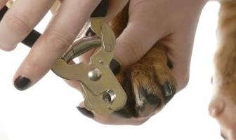 Best Nail Trimmers for Bulldog