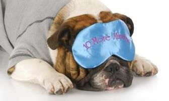 Best Pajamas for Bulldog