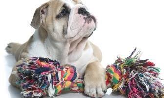 Best Rope Toys for Bulldog
