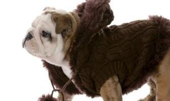 Best Sweaters for Bulldog
