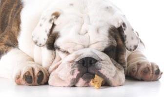 Best Treats for Bulldog