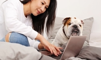 best products for bulldogs