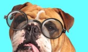 Bulldog eyes problems
