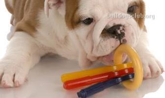 Toys for Bulldogs